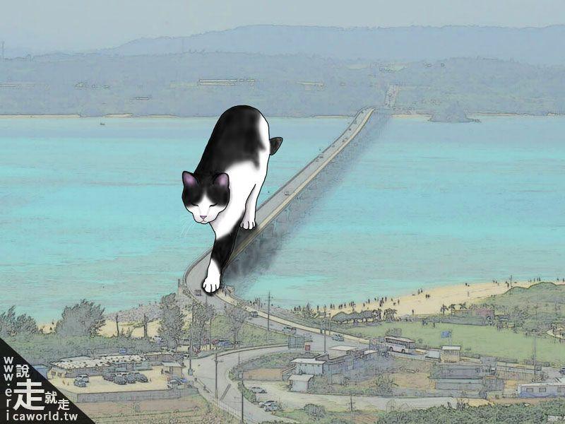 貓 古宇利島