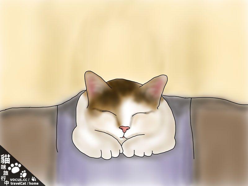 貓咪旅行中