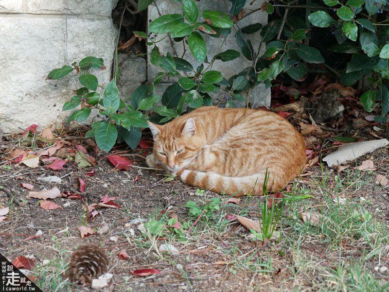 貓咪旅行中 史普利特