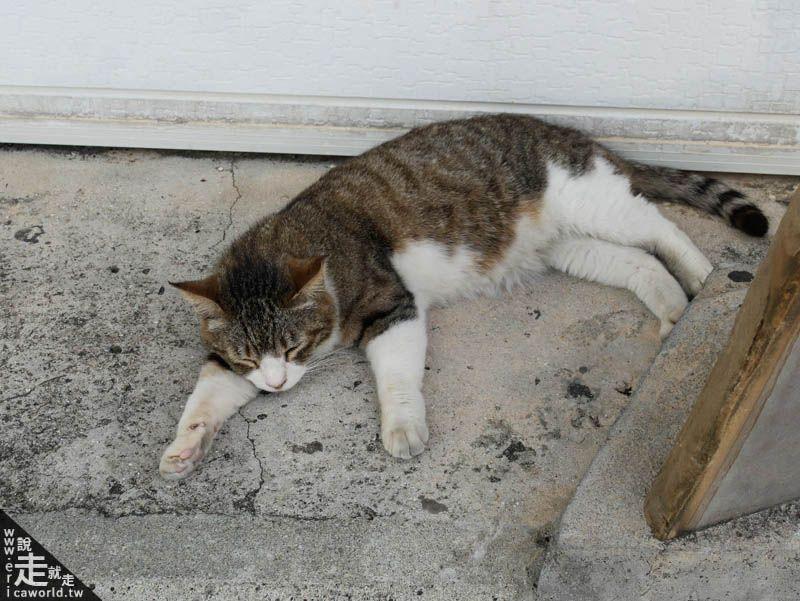 奧武島 貓