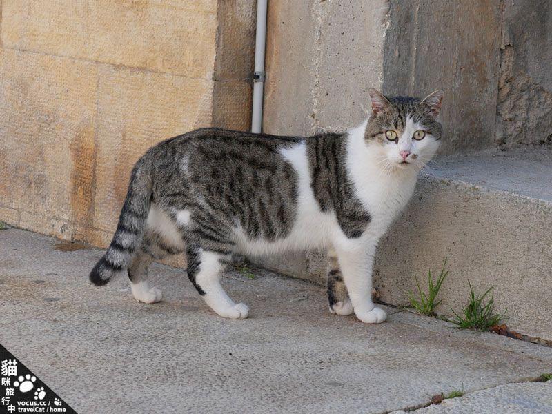 貓咪旅行中 札達爾