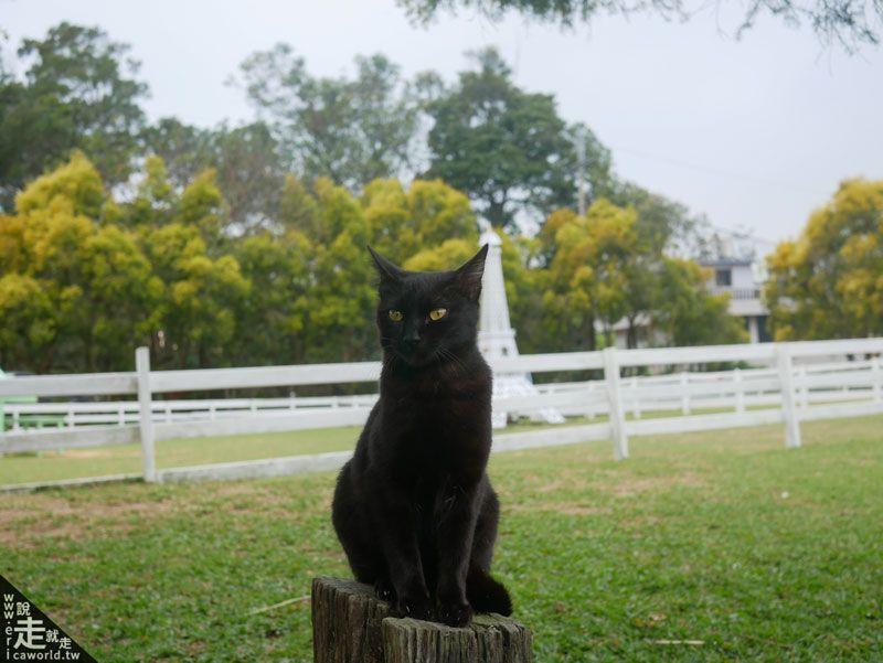 貓咪旅行中 富田農場
